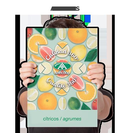 Agrumes Anecoop