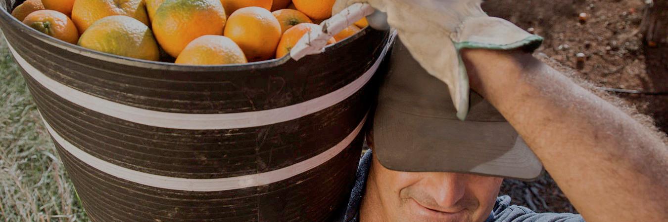 71 cooperativas socias con miles de agricultores asociados