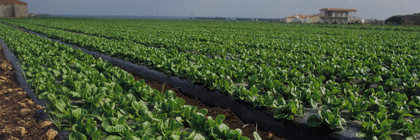 A la búsqueda de una agricultura sostenible