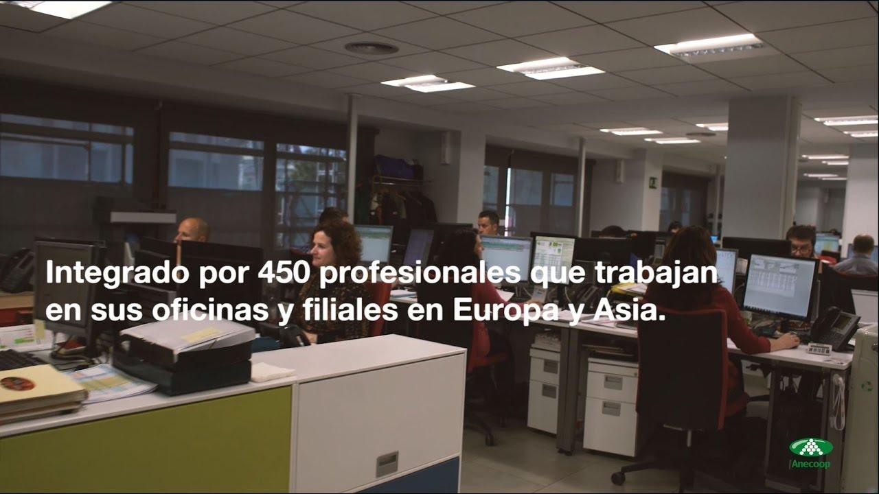 Anecoop's workforce