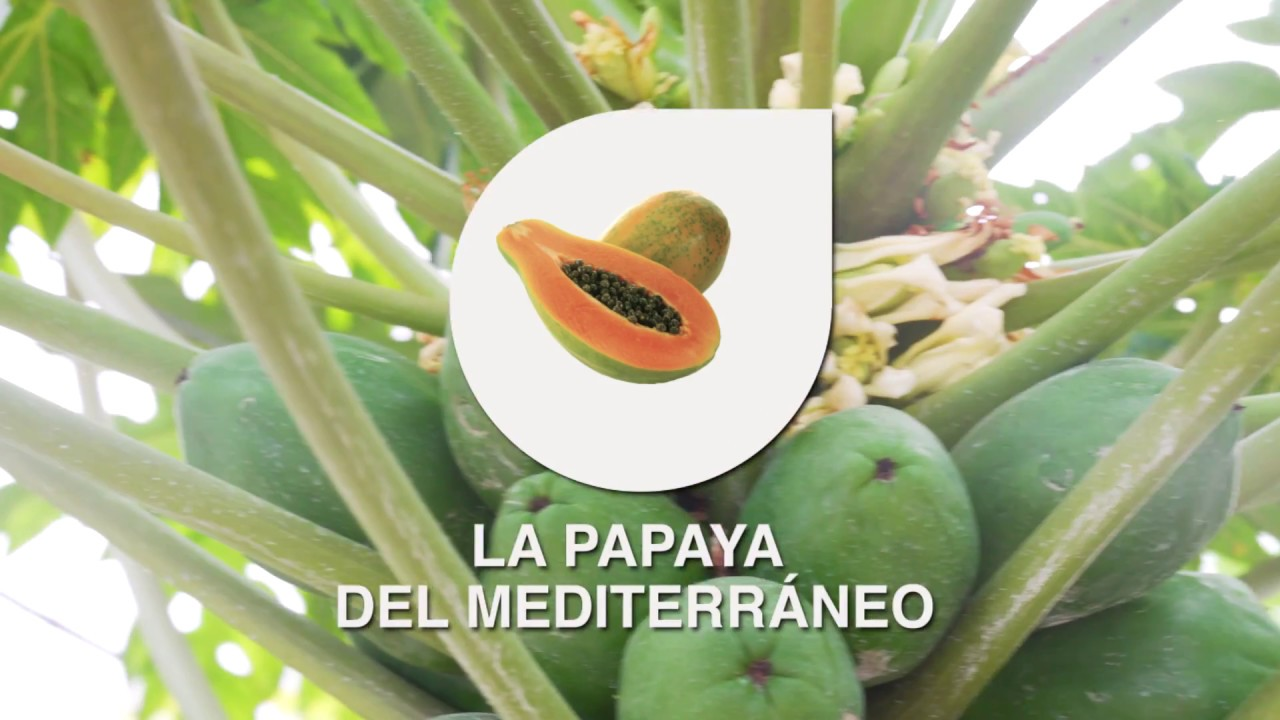 Anecoop présente: La papaye de la Méditerranée