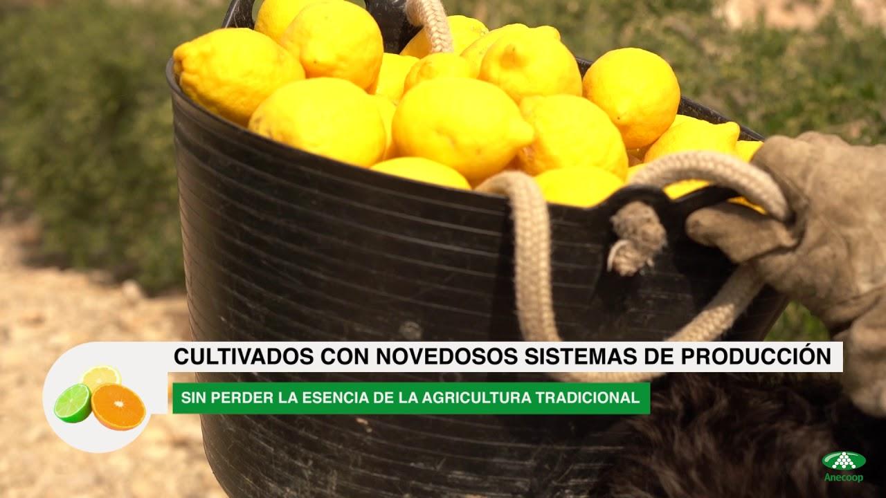 Anecoop presenta: Cítricos de Murcia