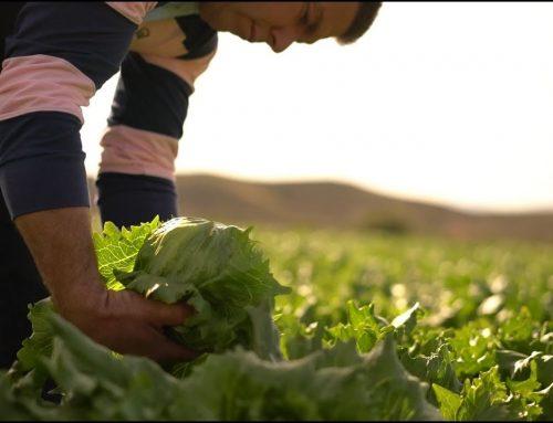 Tribut an die Bauern von Anecoop