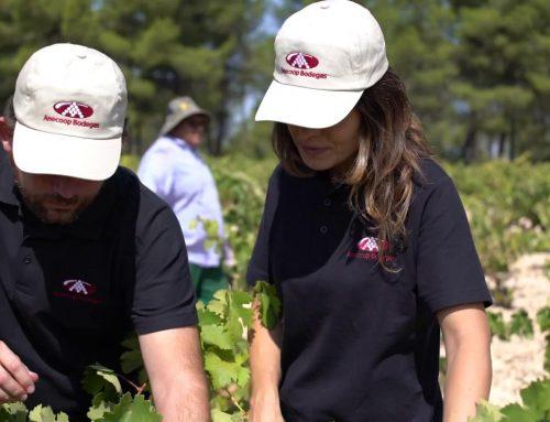 Anecoop Bodegas presenta: Bodega Vinos de La Viña