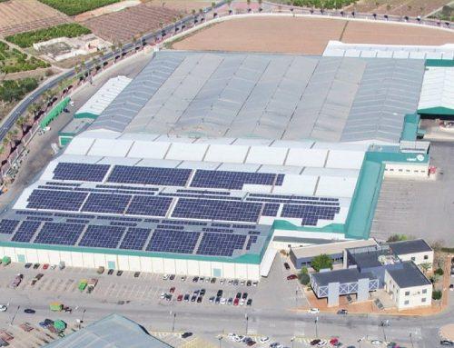 La cooperativa de Algemesí, COPAL, se integra en Green Fruits Coop. V.